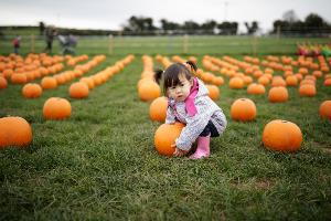 Little girl at the pumpkin patch